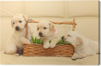 Canvas Labrador puppies