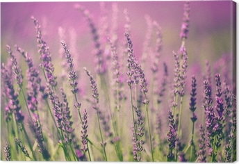 Canvas Lavendel bloem