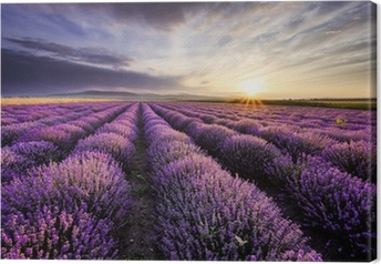 Canvas Lavendel Sunrise