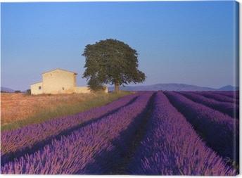 Canvas Lavendel veld in de Provence