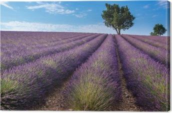 Canvas Lavendel veld in Valensole plateau, Provence (Frankrijk)