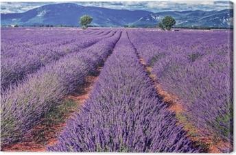 Canvas Lavendel veld
