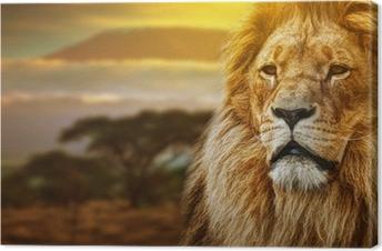 Canvas Leeuw portret op savanne achtergrond en Mount Kilimanjaro