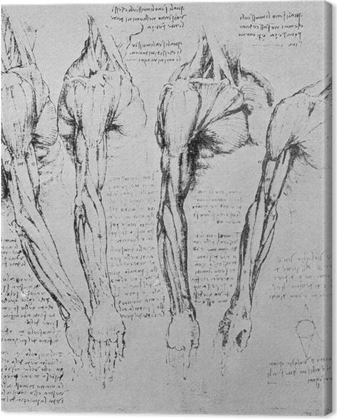 Canvas Leonardo da Vinci - Anatomische studie van de arm - Reproducties