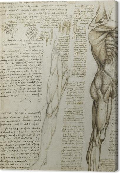 Canvas Leonardo da Vinci - Een anatomische studie - Reproducties