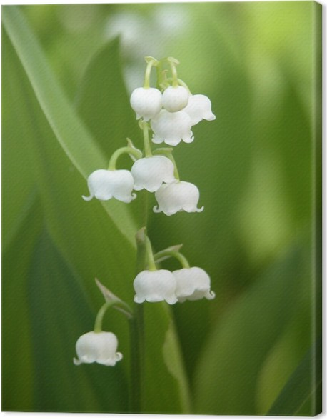 Canvas Lily Of The Valley Pixers We Leven Om Te Veranderen