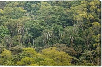 Canvas Luchtfoto van regenwoud