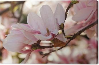 Canvas Magnoliaboom