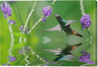 Canvas Mooie kolibrie in reflectie