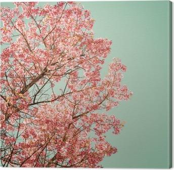 Canvas Natuur achtergrond van de mooie van de boom kersen roze bloem in de lente - vintage pastel kleurfilter