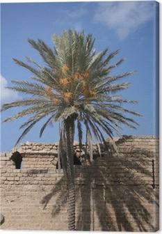 Canvas Ombre et palmier