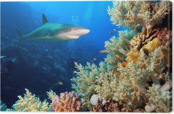 Canvas Onderwater beeld van koraalrif met haai en duikers