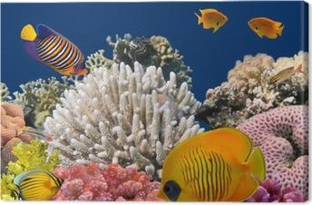 Canvas Onderwater leven van een hard-koraalrif, Rode Zee, Egypte