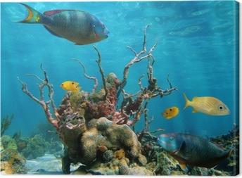 Canvas Onderwater vorm en leven in de zee