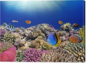 Canvas Onderwater wereld. Koraal vissen van de rode zee.