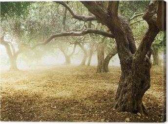 Canvas Oude Olijfbomen
