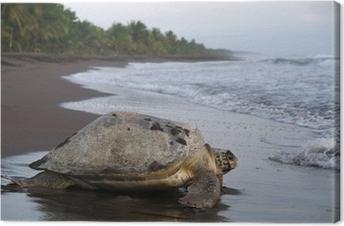 Canvas Overzeese schildpad in Tortuguero Nationaal Park, Costa Rica