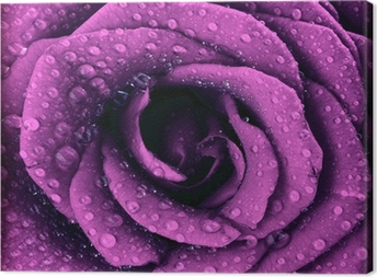 Canvas Paars donker rose achtergrond