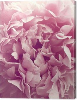 Canvas Pioenroos bloem