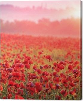 Canvas premium Een veld vol rode klaprozen in de ochtendmist
