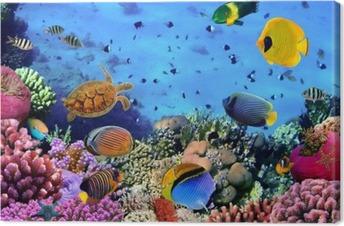 Canvas premium Foto van een koraal kolonie