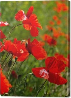 Canvas premium Rode papavers op een groen veld