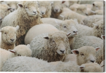 羊 Canvas Print