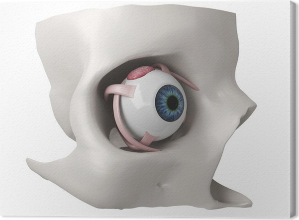 3d Eye Anatomy Model Canvas Print Pixers We Live To Change