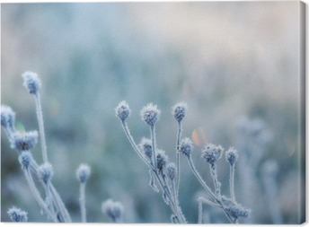 abstract natural background from frozen plant covered with hoarfrost or rime Canvas Print