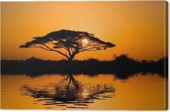 acacia tree at sunrise Canvas Print