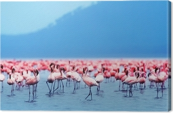 African flamingos Canvas Print