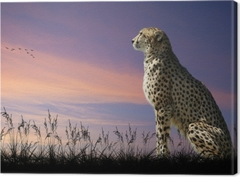 African safari concept image of cheetah looking out over savannn Canvas Print