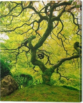 Amazing Green Tree Canvas Print