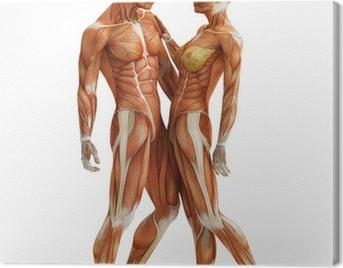 anatomy couple Canvas Print