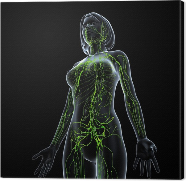 Anatomy Of Female Lymphatic System In Black Canvas Print Pixers