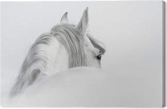 Andalusian horse in a mist Canvas Print