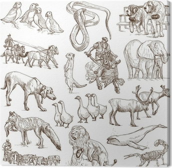 Animals around the world (white set no. 6) - hand drawn Canvas Print