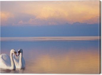 art beautiful Two white swans on a lake Canvas Print