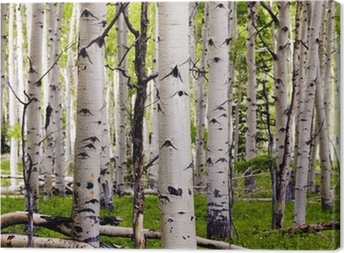 Aspen Spring Canvas Print