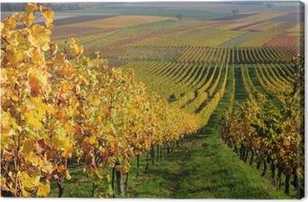 Autumn vineyard landscape in Rhine Valley, Germany Canvas Print
