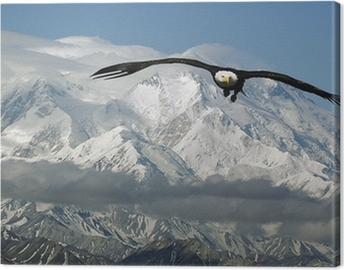 bald eagle in mountains Canvas Print