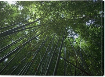 Bamboo Forest on Maui Canvas Print