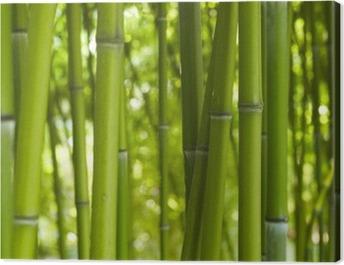 Bambus Bamboo 06 Canvas Print