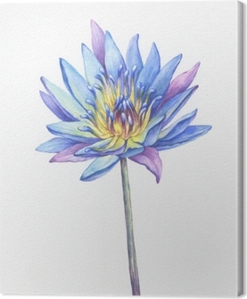 Banner Poster Of Blue Lotus Flower With Leaves Seed Head Bud