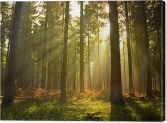 Beautiful forest Canvas Print
