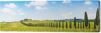 Beautiful landscape with vineyard, Chianti, Tuscany, Italy Canvas Print