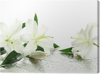 Beautiful lily, isolated on white Canvas Print
