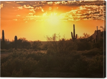 Beautiful sunset view of the Arizona desert with cacti Canvas Print