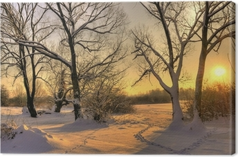 Beautiful winter sunset with trees in the snow Canvas Print