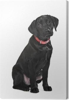 Black Labrador puppy Canvas Print